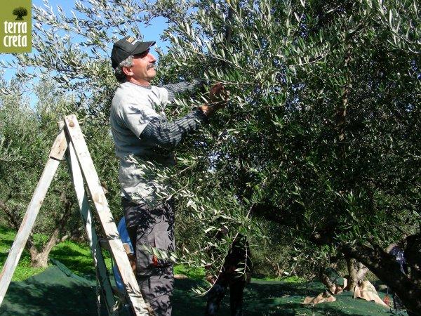 olives-1.jpg